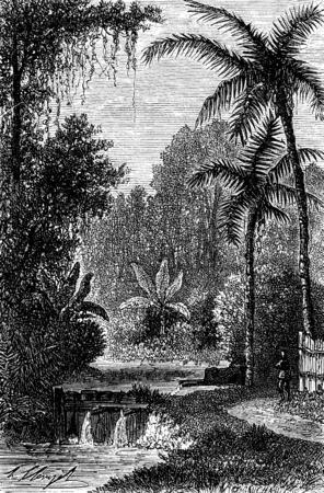 Hot springs near Lake Tondano, vintage engraved illustration. Le Tour du Monde, Travel Journal, (1872).