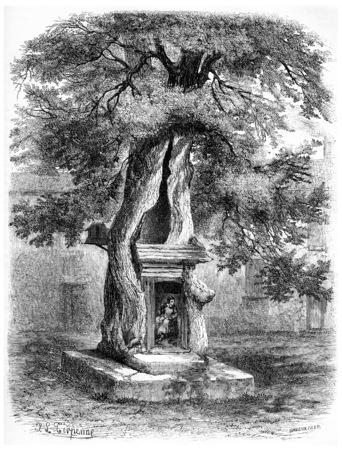 elm: Elm of Salernes, France, vintage engraved illustration. Magasin Pittoresque  1875. Stock Photo