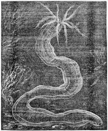 Old engraved illustration of Synapte. Dictionary of words and things - Larive and Fleury