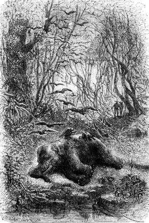 encounter: Encounter an elephant eats by vultures, vintage engraved illustration. Le Tour du Monde, Travel Journal, (1872).