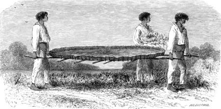 Het vervoer van een blad van Nymphaea, vintage gegraveerde illustratie. Le Tour du Monde, reisverslag, (1865).