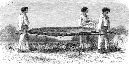 nymphaea: Transporting a sheet of Nymphaea, vintage engraved illustration. Le Tour du Monde, Travel Journal, (1865). Stock Photo