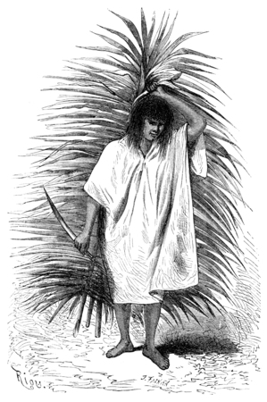 palm frond: Man carrying a palm frond and knife, vintage engraved illustration. Le Tour du Monde, Travel Journal, (1865). Stock Photo