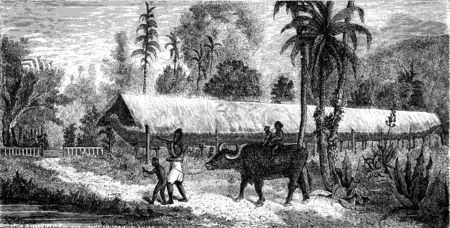 bullock: Canoe race kept under one roof, vintage engraved illustration. Le Tour du Monde, Travel Journal, (1872).