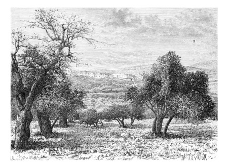mountainous: Mountainous Region of Samaria in Israel as Viewed from a Valley, vintage engraved illustration. Le Tour du Monde, Travel Journal, 1881
