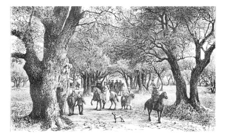 Olive Trees of Nablus in West Bank, Israel, vintage engraved illustration. Le Tour du Monde, Travel Journal, 1881 Фото со стока - 38440668