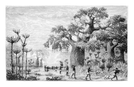 Entourage de Ambriz en Angola, en Afrique, dessin de Monteiro, illustration vintage gravé. Le Tour du Monde, Voyage Journal 1881