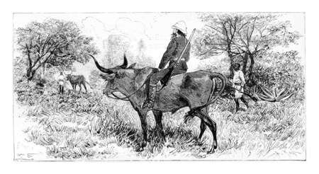 Soldier Riding a Buffalo in Angola, Southern Africa, drawing by Ferdinandus based on a sketch by Serpa Pinto, vintage engraved illustration. Le Tour du Monde, Travel Journal, 1881