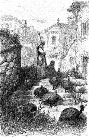 turkeys: Pave a (airs turkeys), Salamanca campaign, vintage engraved illustration. Le Tour du Monde, Travel Journal, (1872).