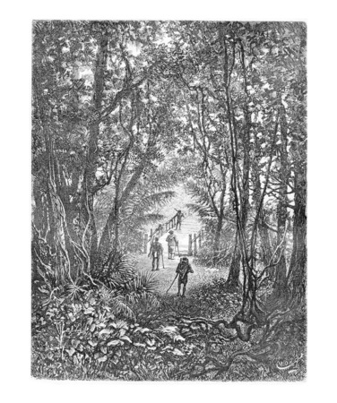 dr: Crossing a Small Bridge in the Jungle in Oiapoque, Brazil, drawing by Riou from a sketch by Dr. Crevaux, vintage engraved illustration. Le Tour du Monde, Travel Journal, 1880