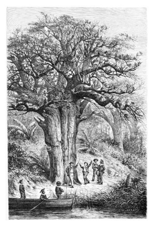 Singes dans le jardin de Jacintho Amoriz, dessin de De Bar basées sur une esquisse de Serpa Pinto, illustration vintage gravé. Le Tour du Monde, Voyage Journal 1881