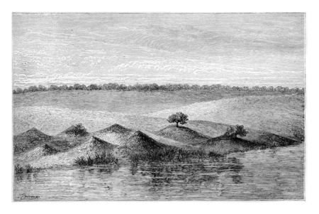 termite: Termite Mounds in Southern Africa, covered by vegetation, engraving based on the English edition, vintage illustration. Le Tour du Monde, Travel Journal, 1881