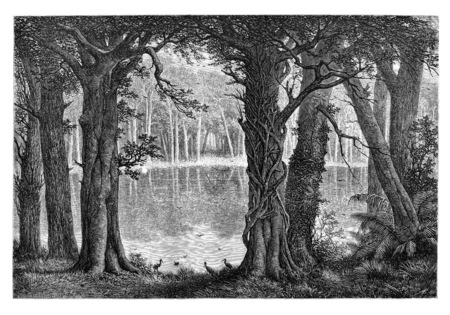 drawing: Lake Ligouri, in Angola, Southern Africa, drawing by De Bar based on the English edition, vintage illustration. Le Tour du Monde, Travel Journal, 1881 Stock Photo