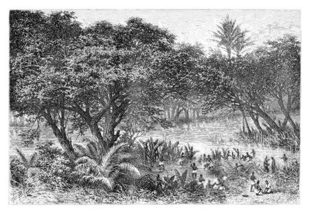 Collecte nègres tortues sur les rives de la rivière Guengo, en Angola, en Afrique australe, dessin de De Bar basés sur les écrits, illustration vintage. Le Tour du Monde, Voyage Journal 1881