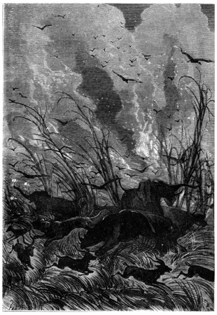 black and white forest: Scream, vintage engraved illustration. Jules Verne 3 Russian and 3 English, 1872.