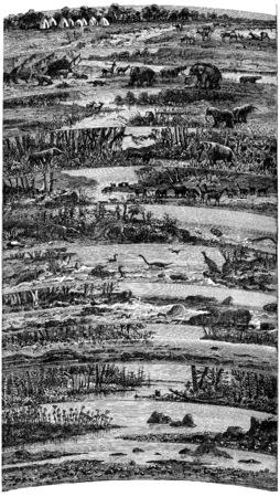 fauna: Desarrollos progresivos flora y fauna edades sucesivas de la tierra, ilustraci�n de la vendimia grabado. Tierra antes que el hombre - 1886. Foto de archivo