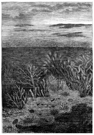 inhabit: The first days of age Silurian, The only waters are inhabited.The world before the creation of man, vintage engraved illustration. Earth before man – 1886.