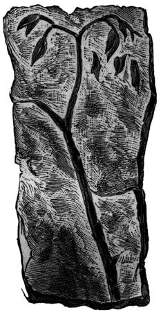 originator: Older plants, Psilophyton originator. Silurian and Devonian land, vintage engraved illustration. Earth before man – 1886.