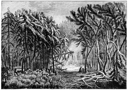 devonian: The first forests. Devonian period, vintage engraved illustration. Earth before man – 1886.