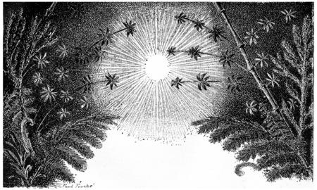 carboniferous: The Carboniferous period, vintage engraved illustration. Earth before man – 1886.