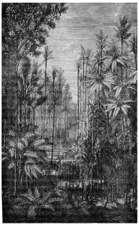 era: Forest Of The Carboniferous Era, vintage engraved illustration. Earth before man – 1886.