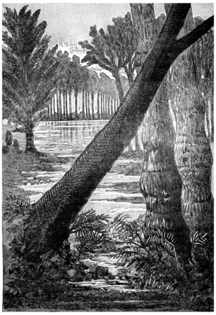 carboniferous: The giant trees of the Carboniferous period. Sigillaires, lepidodendrons ferns, vintage engraved illustration. Earth before man – 1886. Stock Photo
