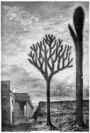 erect: Resurrected today, these giant trees will make a strange figure, vintage engraved illustration. Earth before man – 1886.