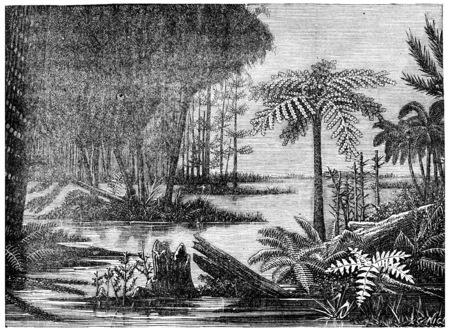 carboniferous: A landscape of the coal era, vintage engraved illustration. Earth before man – 1886.