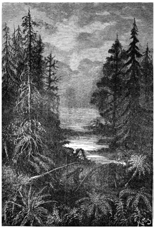 period: A forest in the early centuries of the Cretaceous Period, vintage engraved illustration. Earth before man – 1886. Stock Photo