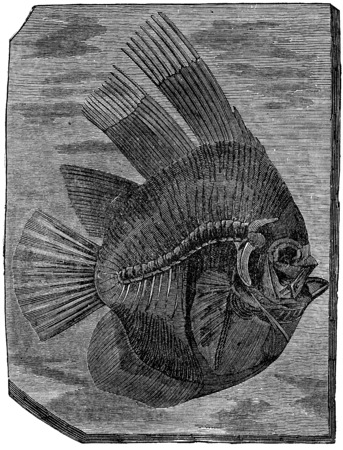 period: Batfish altissimus, The fish of the Eocene period, vintage engraved illustration. Earth before man – 1886.