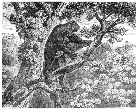period: The Galeopithecus, lemurien of the Eocene period, vintage engraved illustration. Earth before man – 1886.
