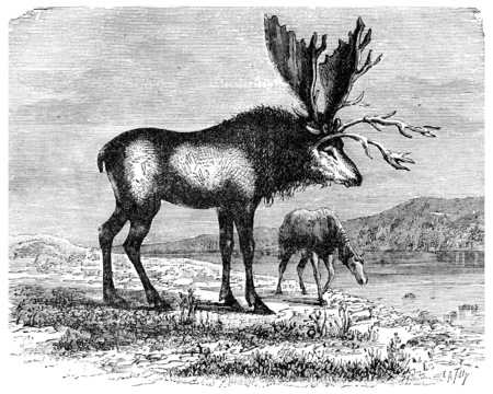 The Sivatherium, kite colossus Pliocene time, vintage engraved illustration. Earth before man – 1886.