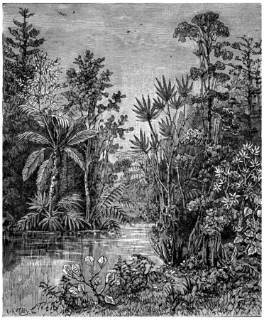 Plant landscape of the Cretaceous period, Bohemia, vintage engraved illustration. Earth before man – 1886. 스톡 콘텐츠