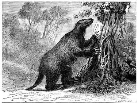 period: The mylodon (Pliocene period of South America), vintage engraved illustration. Earth before man – 1886.