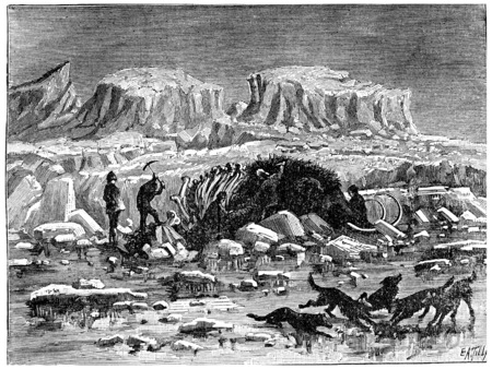 siberia: Mammoth found in the ice of Siberia, with its meat and skin, vintage engraved illustration. Earth before man – 1886.