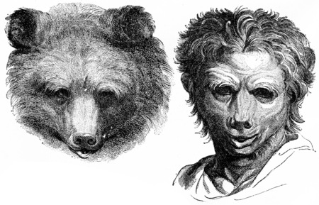 resemblance: Bear, vintage engraved illustration. Earth before man – 1886. Stock Photo