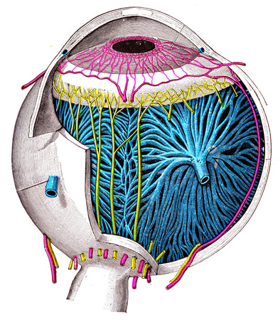 cornea: The Eyeball, vintage engraved illustration. Stock Photo
