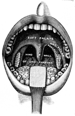 uvula: The receiving room, vintage engraved illustration.