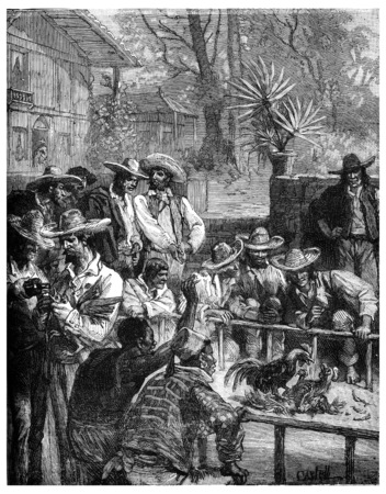 The red cock was under his opponent, vintage engraved illustration. Journal des Voyage, Travel Journal, (1880-81). Stok Fotoğraf