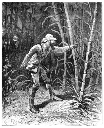 two thousand: Two thousand miles across South America, Clings to his finger a little snake, vintage engraved illustration. Journal des Voyage, Travel Journal, (1880-81).