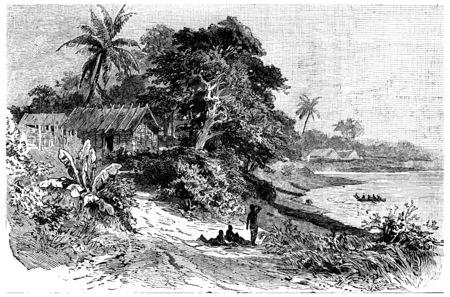 vegetation: Vegetation at the mouth of the Cameroon River, vintage engraved illustration. Journal des Voyage, Travel Journal, (1880-81).