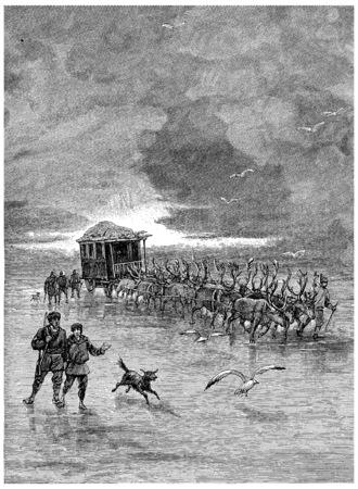 Reindeer were harnessed four by four, vintage engraved illustration. Jules Verne Cesar Cascabel, 1890. Banco de Imagens