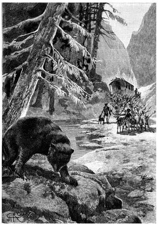 The bear shook his big head one last time, vintage engraved illustration. Jules Verne Cesar Cascabel, 1890. illustration