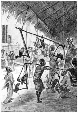 Dolly Hope naar het eiland van Singapore, vintage gegraveerde illustratie breken. Jules Verne Meesteres Branican, 1891.