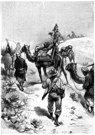 antique rifle: Patients were lying on the back of two camels, vintage engraved illustration. Jules Verne Mistress Branican, 1891.