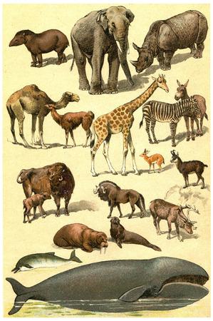 morse: Legend of Plate, vintage engraved illustration. La Vie dans la nature, 1890.