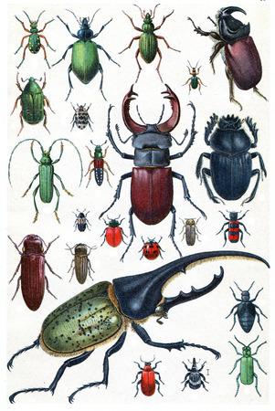 escarabajo: Leyenda Plate IX, ilustración de la vendimia grabado. La Vie dans la nature, 1890.