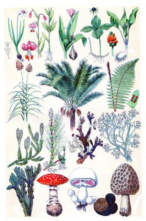plants species: Leggenda Tavola 16, vintage illustrazione inciso. La Vie dans la nature, 1890. Archivio Fotografico