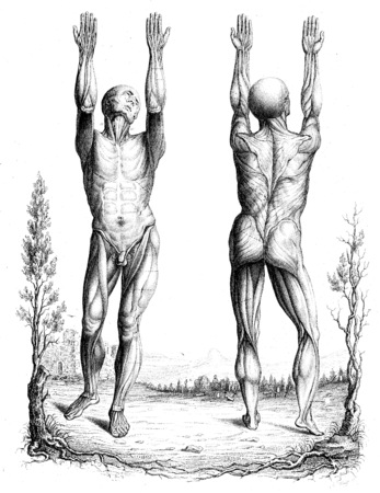anatomy nude: Outline of a theory and an anatomical nomenclature, vintage engraved illustration. Stock Photo