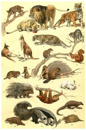 representations: Legend of Plate, vintage engraved illustration. From La Vie dans la nature, 1890. Stock Photo